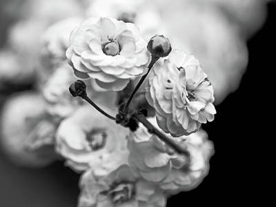 Photograph - Flower In Black And White by Elijah Knight