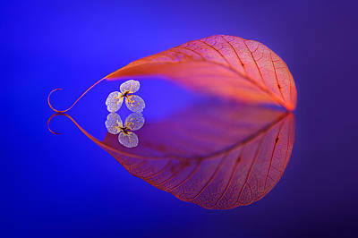 Flora Photograph - Flower In Heaven by Sophie Pan