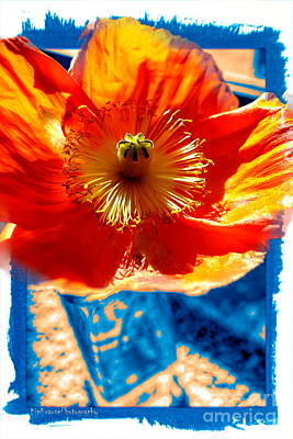 Photograph - Flower In Moms Garden by Kip Krause