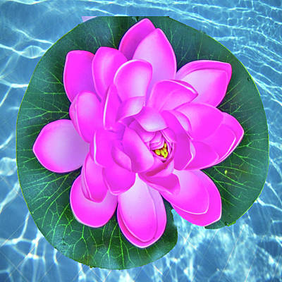 Photograph - Flower In The Pool by Dennis Dugan