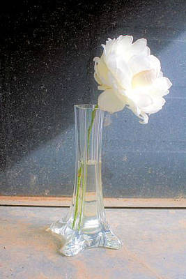 Photograph - Flower In Vase by Paulette Maffucci