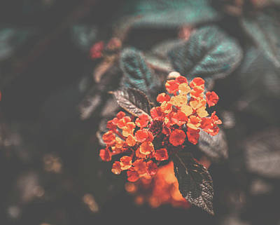 Photograph - Flower In Vintage Look by Hyuntae Kim