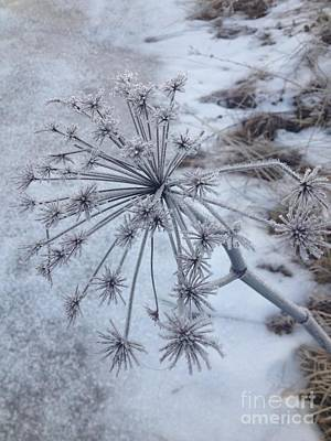 Photograph - Flower In Winter by Kirsi Wahlstrom