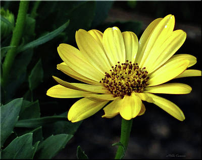 Photograph - Flower In Yellow by Mikki Cucuzzo