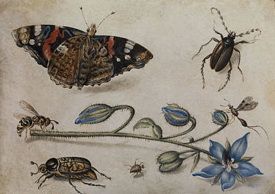 Grasshopper Painting - Flower, Insects And Butterfly by Jan van Kessel