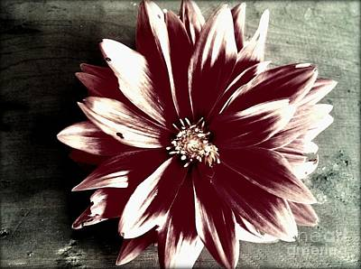 Photograph - Flower by Janice Spivey