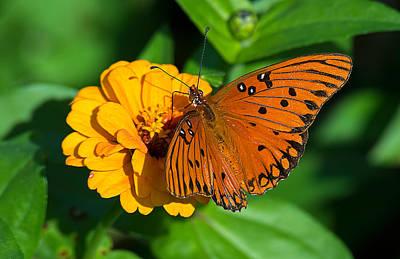 Photograph - Flower Joy by Kenneth Albin