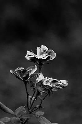 Mountain Landscape - Flower by Katarina Muyres