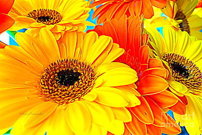 Photograph - Flower - Life Of A Daisy by Kip Krause