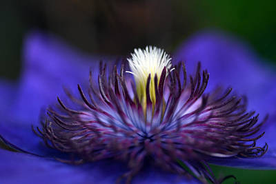 Photograph - Flower Light by Wanda Brandon