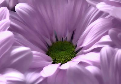 Photograph - Flower Macro Beauty 3 by Johanna Hurmerinta