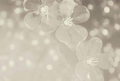 Photograph - Flower Magic by The Art Of Marilyn Ridoutt-Greene