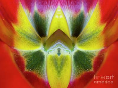 Photograph - Flower Mandala - 0247-d by Paul W Faust - Impressions of Light