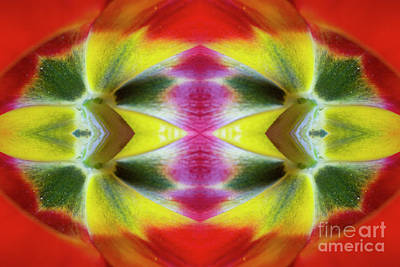 Photograph - Flower Mandala - 0247e by Paul W Faust - Impressions of Light