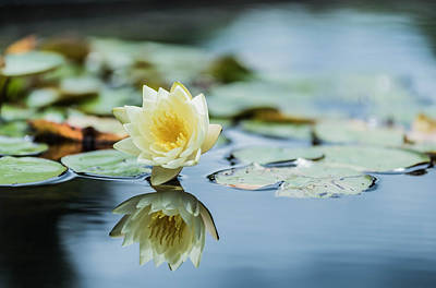 D700 Photograph - Flower by Mauricio Fernandez