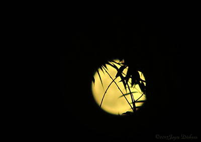Photograph - Flower Moon 05 03 15 by Joyce Dickens