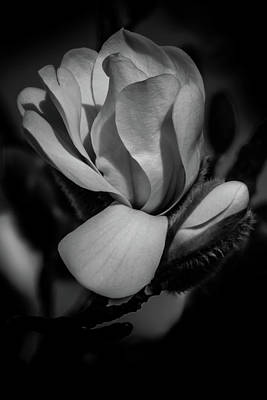 Flower Noir Art Print