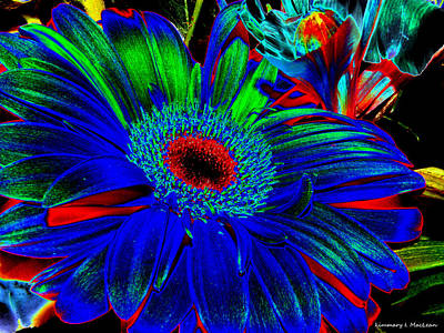 Photograph - Flower Of Blue by Kimmary MacLean