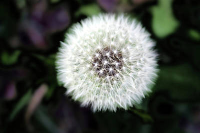 Weeds Digital Art - Flower Of Flash by Mark Ashkenazi