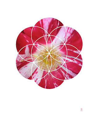 Green Surreal Geometry Digital Art - Flower Of Life Iv Rose by Joanna Whitney
