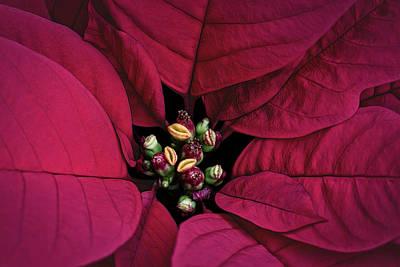 By Jackie Photograph - Flower Of The Holy Night by Jackie Sajewski