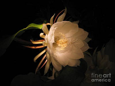 Photograph - Flower Of The Night 04 by Andrea Jean