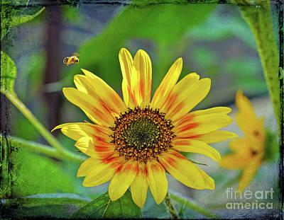 Photograph - Flower Of The Sun by Kerri Farley