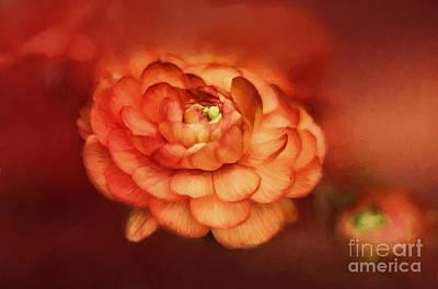 Water Droplets Sharon Johnstone - Flower on Fire by Darren Fisher
