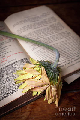 Gerbera Photograph - Flower On Old Bible by Edward Fielding