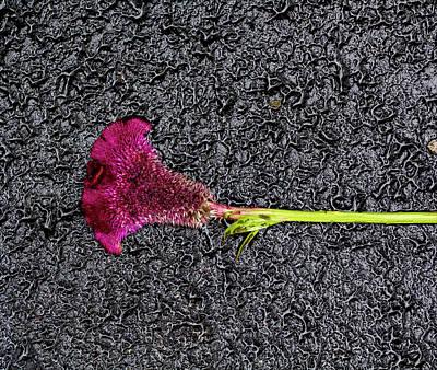 Pineapple - Flower on the Street by Robert Ullmann