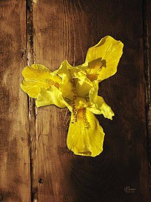 Photograph - Flower On Wood 1 by Jim Ziemer
