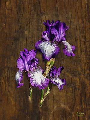 Photograph - Flower On Wood 2 by Jim Ziemer