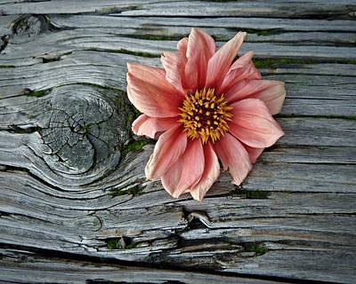Photograph - Flower On Wood I by Patricia Strand