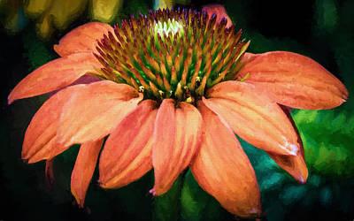 Echinacea Photograph - Flower - Orange Coneflower - Sunbeam - Macro by Black Brook Photography