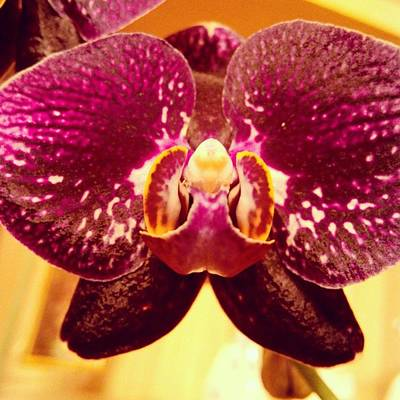Orchids Photograph - #flower #orchid #flowers #orchids by Yaroslavna Biskub