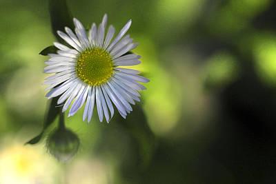 Digital Art - Flower by Patrick Groleau