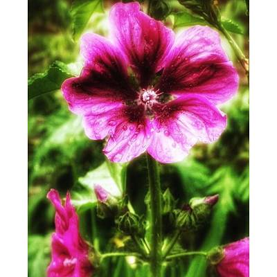 Photograph - #flower #photos #photoofday by Isabella F Abbie Shores