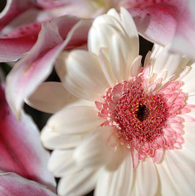 Photograph - Flower Pink-white by Jill Reger