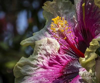 Photograph - Flower Pollen by Joann Long