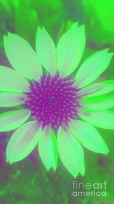 Digital Art - Flower Pop 2 by Rachel Hannah