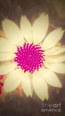 Photograph - Flower Pop 3 by Rachel Hannah