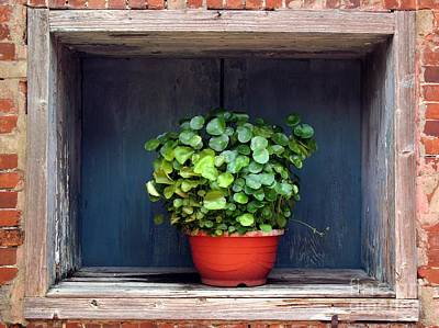 Flower Pot In A Window Art Print