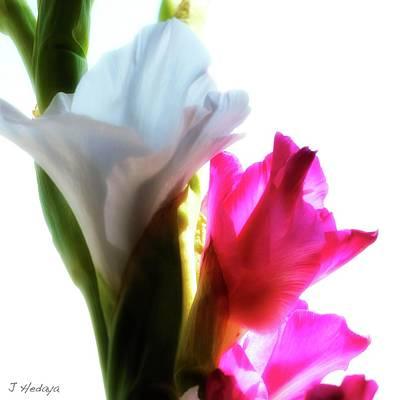 Photograph - Flower Power 7 by Joseph Hedaya