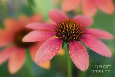 Photograph - Flower Power by Debbie Green