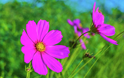Parkersburg Wv Photograph - Flower Power by Jonny D