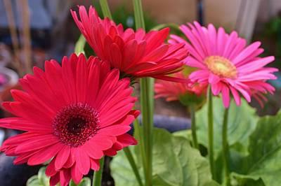 Western Art - Flower Power by Marla McPherson