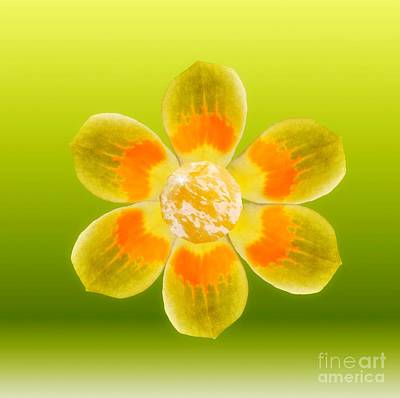 Digital Art - Flower Power by Rachel Hannah