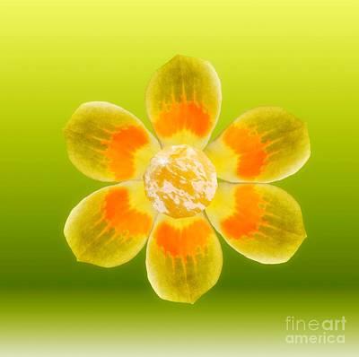 Digital Art - Flower Power by Rachel Hannah