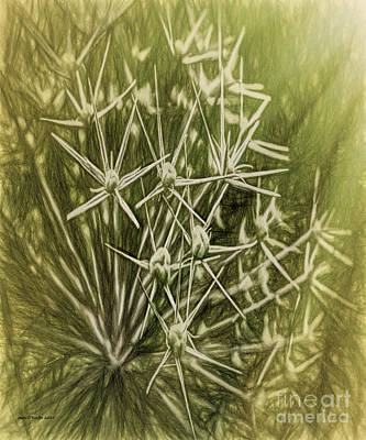 Creative Manipulation Photograph - Flower Rays by Jean OKeeffe Macro Abundance Art