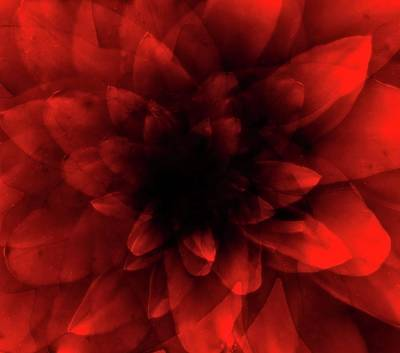 Abstract Rose Digital Art - Flower  Red Shade by Johan Lilja